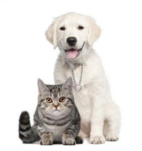 huisdieren hond kat
