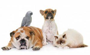 huisdieren kosten